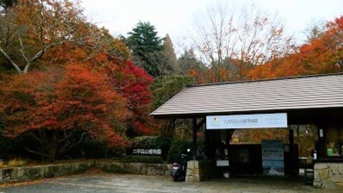 六甲高山植物園 紅葉 '19