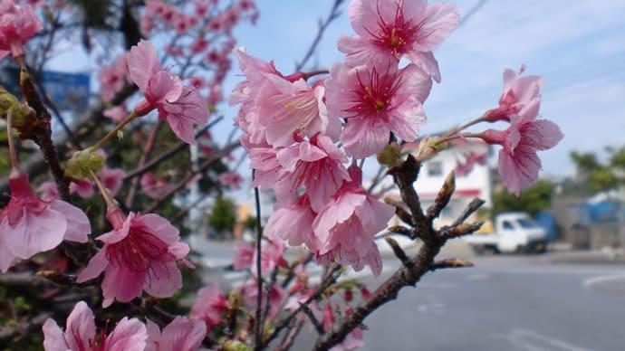 沖縄の風景~桃色の世界