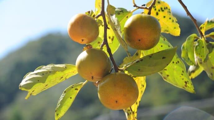 食欲の秋で旬の食材