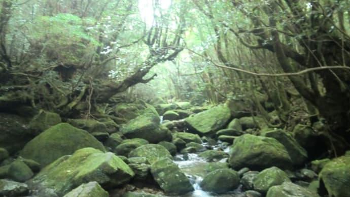 屋久島トレッキング2013 -2-