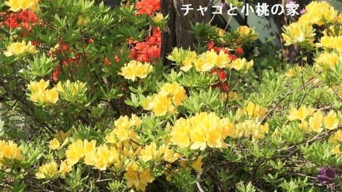 昨日の庭と(=^・^=)