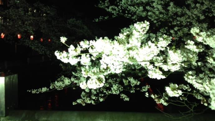 夜桜ウオーキング