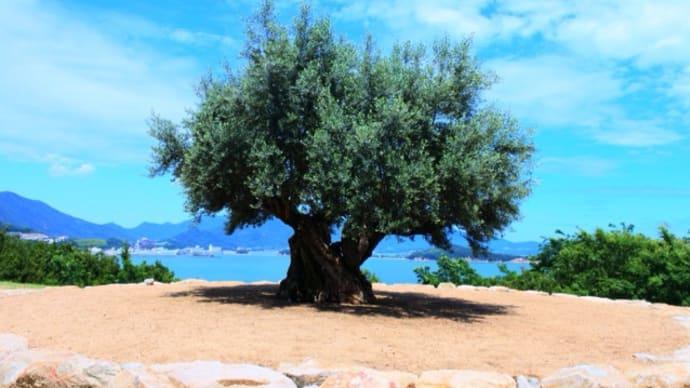 千年のオリーヴの樹