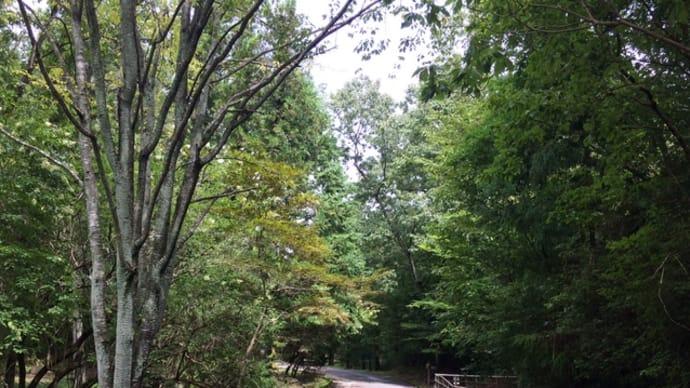 関百年公園