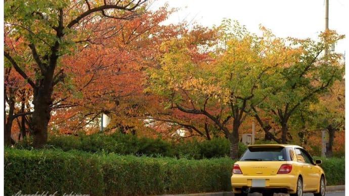 秋の大川べりで