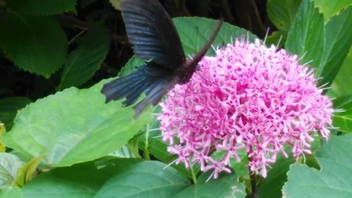蝶の禱り。