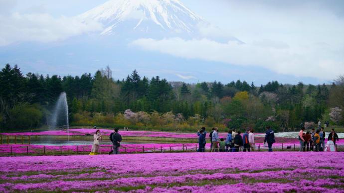 #2021 富士芝桜まつり