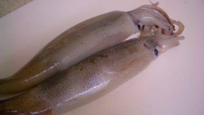 イカの塩辛を作りました。