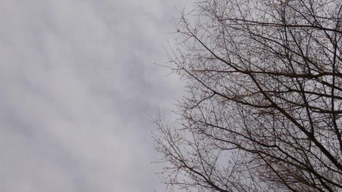 栃木県那須塩原市・大山公園(大山参道)の紅葉情報 最終章 2019.12.15 前編