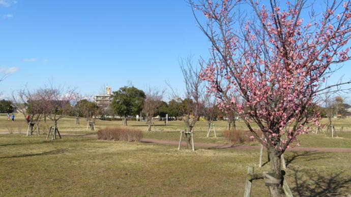 風景印(104) 中田中央公園で梅の花を楽しむ <仙台袋原郵便局>