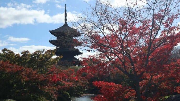 京都 東寺  紅葉と五重塔
