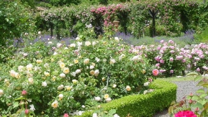 「リリアンオースティン」~モネの色彩と「Rose Library」(30)