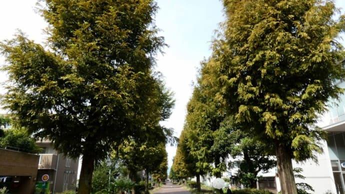 ・ ふれあいの森 花散歩 シュウメイギク、 ローズヒップ など (2021/09/13)