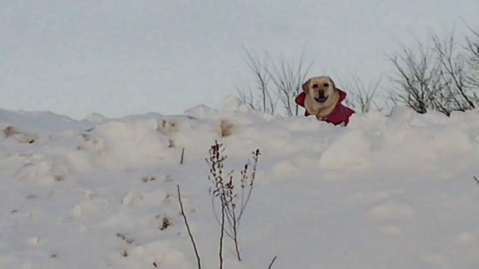 ぬかる雪❄️