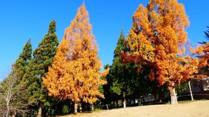 岡山農業公園 ドイツの森