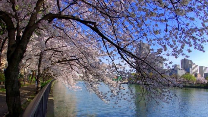 大川の川面が桜色に染まる