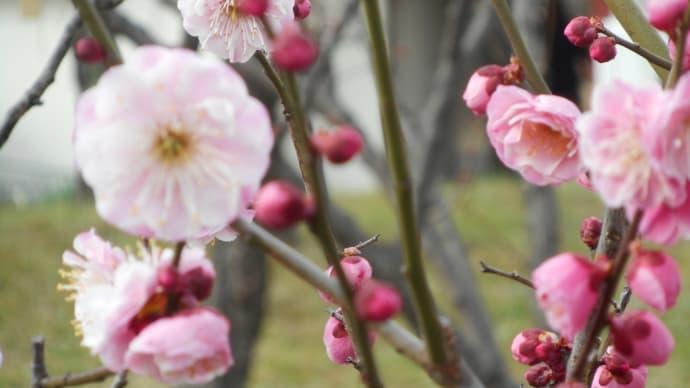 春を探しに~♪ (1)