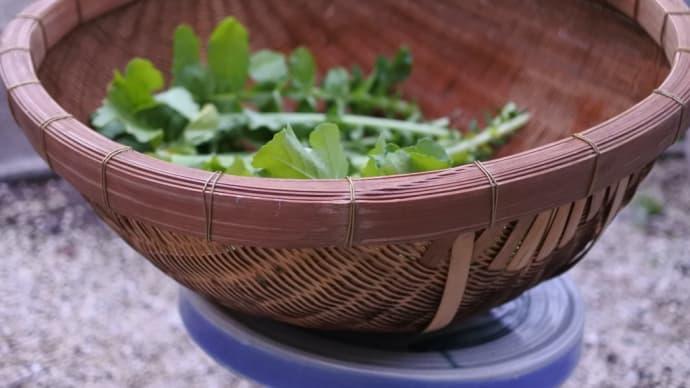 竹の深ザル