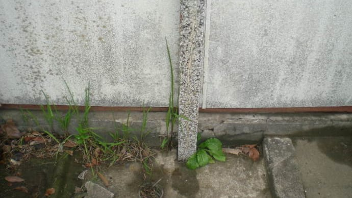 水栓柱付近での漏水