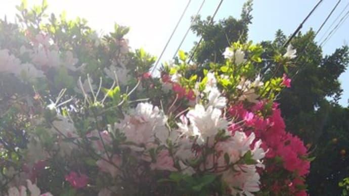 """羽生結弦がエキシビ「花は咲く」披露""""星空""""の下「希望や勇気」「何かの光に」・・・ それに引き換え、、"""