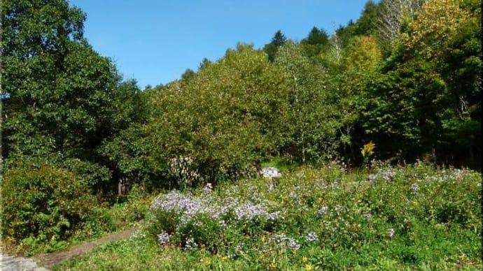 ファーブルの森・野草園