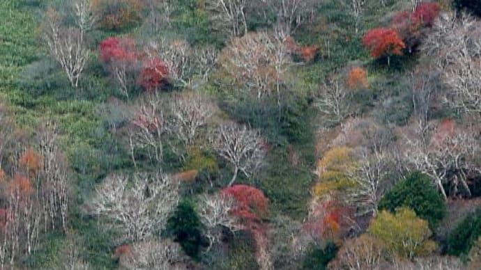 奥日光の秋