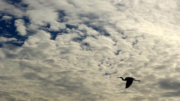 高層雲と鷺