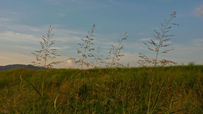 9月1日から9月3日まで、おわら風の盆