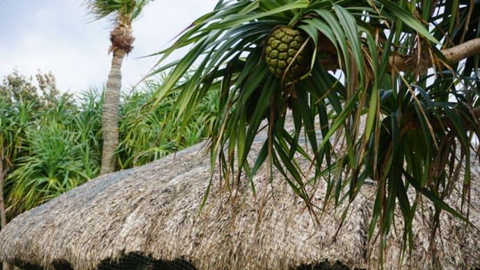 南国の楽園奄美大島   その5  大浜海浜公園