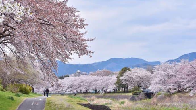 桜の季節の終わる頃
