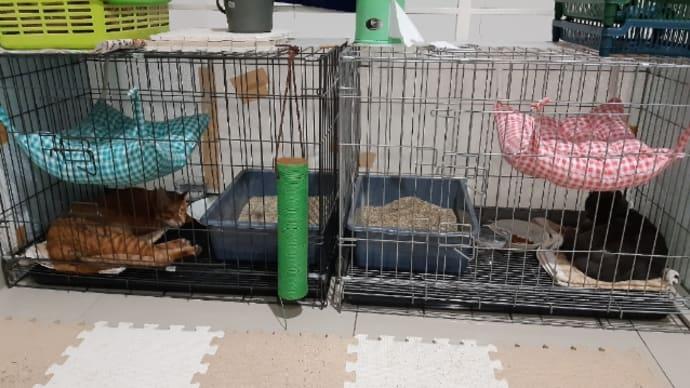 猫達の新しい寝場所 続編その1