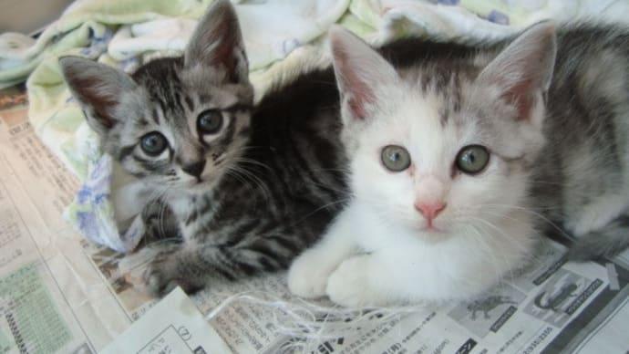 2021年7月18日(日曜日)「猫の譲渡会」開催いたします!!