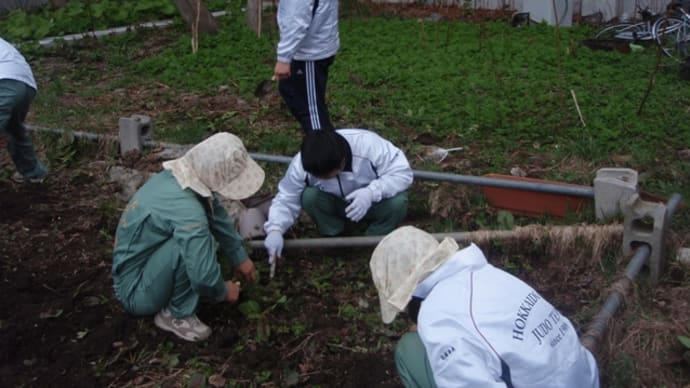 2011年  農園開墾!!!