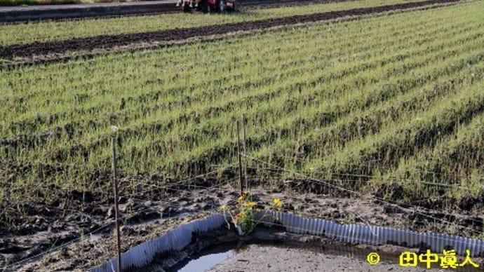 下永・3町境界圃場の苗代の水口まつり