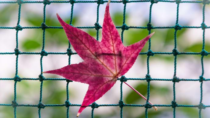 秋の大文字