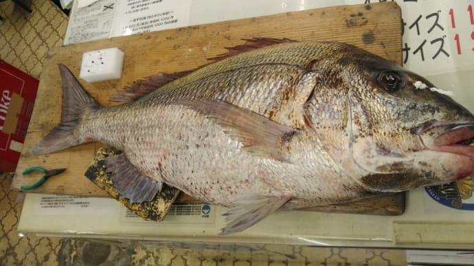 魚拓ラッシュ