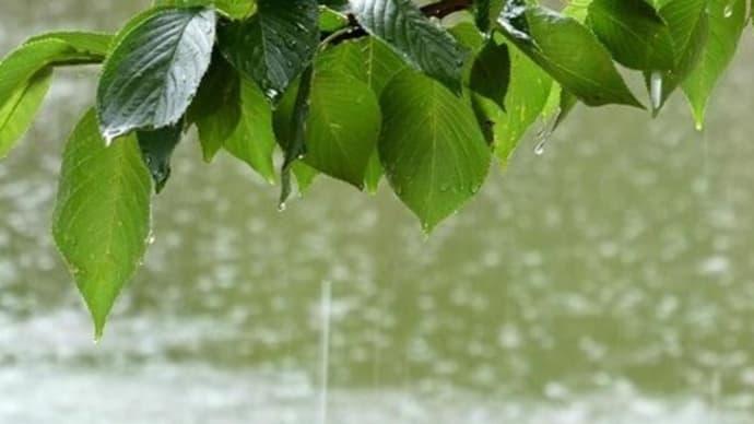 秋の雨音とショパンの調べと♬