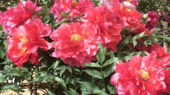 山陰へ花を求めて「由志園」パート5