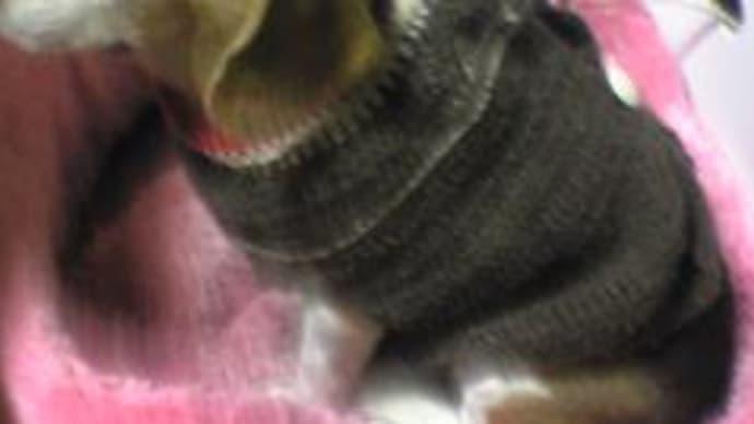 お絵かき & 編み物