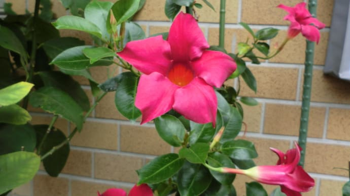 雨に咲く深紅の花📷街角ぶらり旅