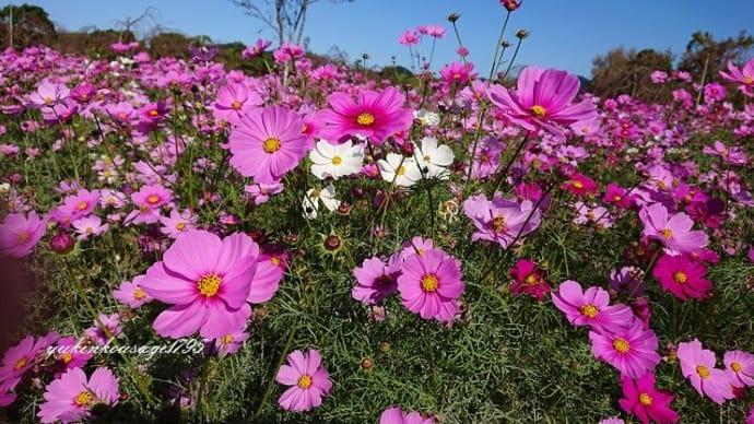 季節の花・秋