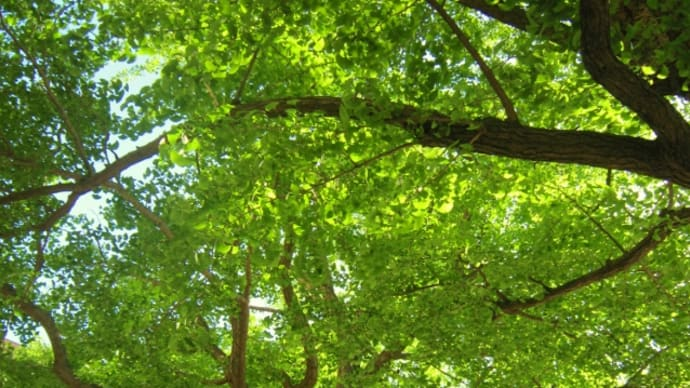 眩しい木漏れ日の中*お散歩🎶