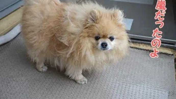 雨の日あるある?な愛犬のやらかし
