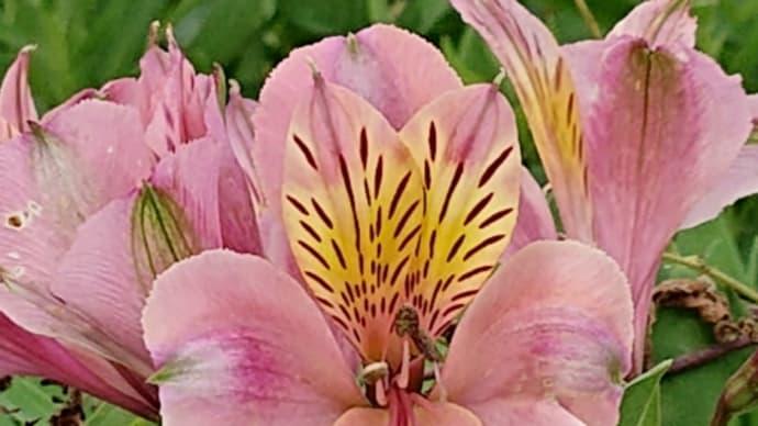 秋の花咲く散歩道🎵花🎵オレンジ・レンジ