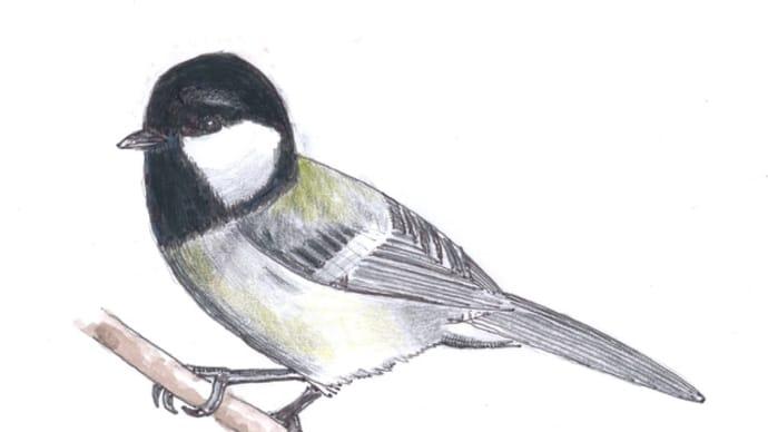 玉川上水の野鳥について 大塚惠子