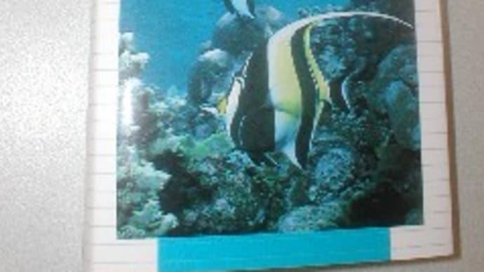 おすすめの海水魚図鑑