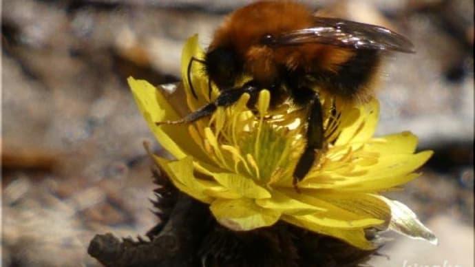 ハチも飛び出して