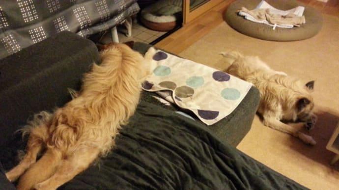 ソファーにユノ、床にティアラ