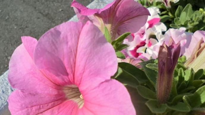 街角に咲く花📷街角ぶらり旅06-03