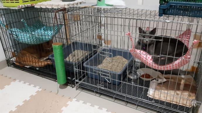 猫達の新しい寝場所 続編その2